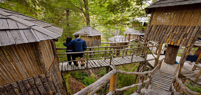 Tree Houses (photo © Carr Clifton)